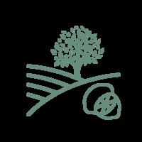 Campisi-alberi